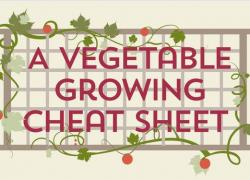 The Ultimate Cheatsheet For Growing Vegetables…