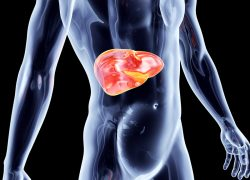 7 Simple Ways to Protect Your Liver